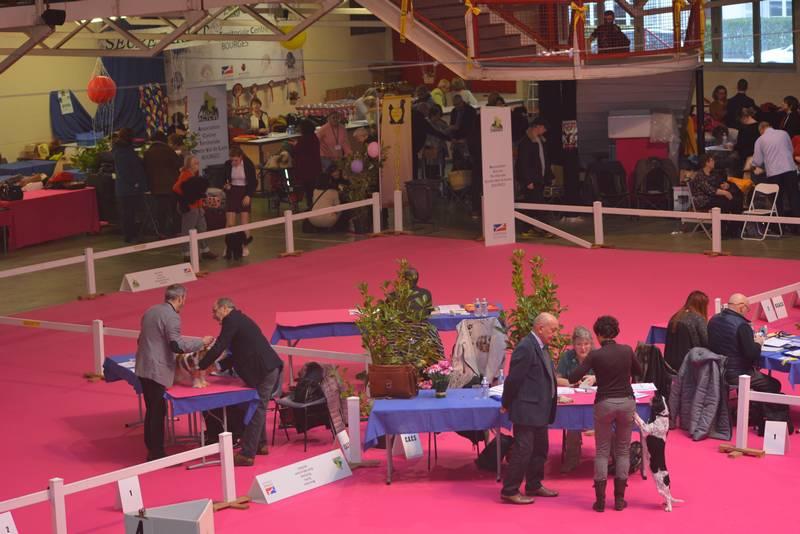 Elevege du Charme aux Loups Expo canine Bourges 17 02 2018